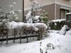 Snow1blg