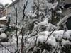 Snow2blg_2